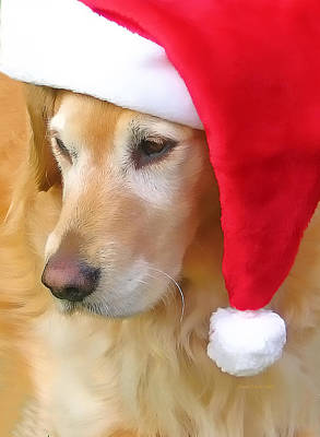 Golden Retriever Dog In Santa Hat  Art Print by Jennie Marie Schell