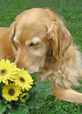 Photograph - Golden Retriever Dog Smell The Flowers by Jennie Marie Schell