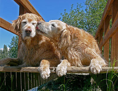 Comics Royalty-Free and Rights-Managed Images - Golden Retriever Dogs The Kiss by Jennie Marie Schell