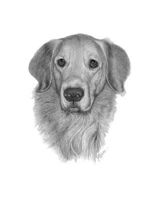 Drawing - Golden Retriever by Joe Olivares