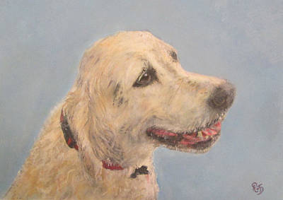 Pet Portrait Of Golden Retriever Maisie  Art Print by Richard James Digance