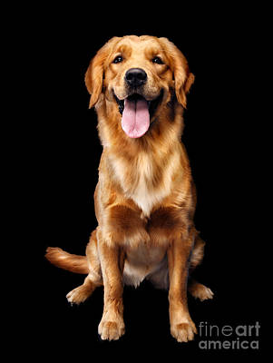 Golden Retriever On Black Background Art Print by Oleksiy Maksymenko