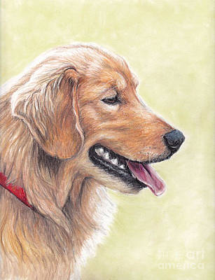 Drawing - Golden Retriever Profile by Charlotte Yealey