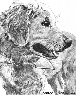 Golden Retriever Drawing - Golden Retriever Puppy In Profile by Kate Sumners