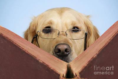 Manipulated Digital Photograph - Golden Retriever Reading Book by John Daniels