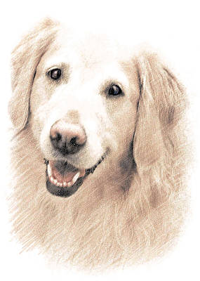 Retriever Digital Art - Golden Retriever by Ronald Hurst