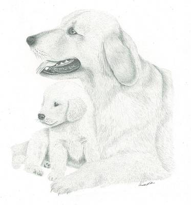 Golden Retriever Art Print by Ronald Scott