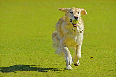 Golden Retriever Running On A Green Art Print by Rona Schwarz