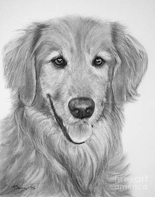 Drawing - Golden Retriever Sketch by Kate Sumners