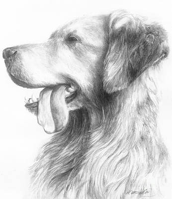 Drawing - Golden Retriever Study by Meagan  Visser
