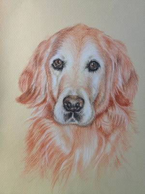 Commission Work Drawing - Golden Retriever by Sun Sohovich
