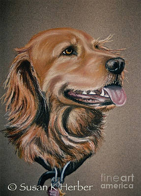 Pastel - Golden Retriever by Susan Herber