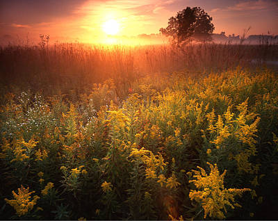 Photograph - Golden Rod Glow by Ray Mathis