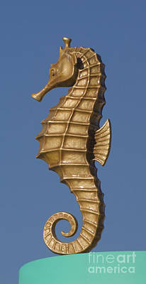 Photograph - Golden Seahorse by Jim And Emily Bush