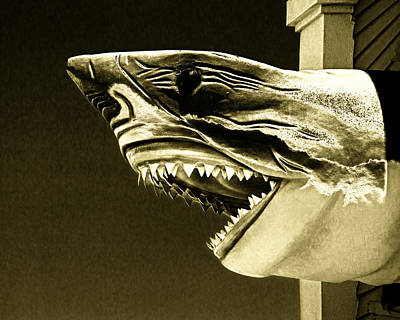 Photograph - Golden Shark In Ocean City by Bill Swartwout Fine Art Photography