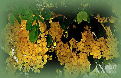 Fistula Photograph - Golden Shower Tree by Toni Abdnour