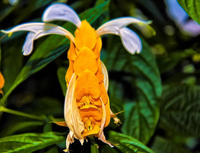 Digital Art - Golden Shrimp Plant by Chris Flees