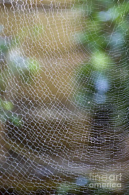 Photograph - Golden Silk Orb Weaver's Web Design by Kerryn Madsen-Pietsch