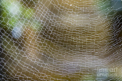 Photograph - Golden Silk Orb Weaver's Web Pattern Detail by Kerryn Madsen-Pietsch