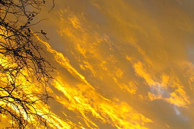 Photograph - Golden Sky by Andrea Dale