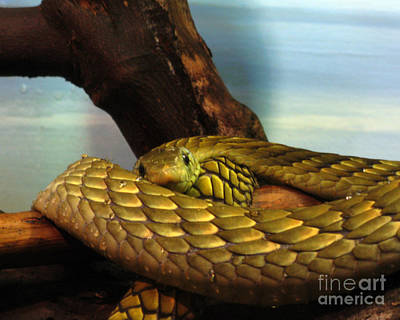 Photograph - Golden Snake by Patricia Januszkiewicz