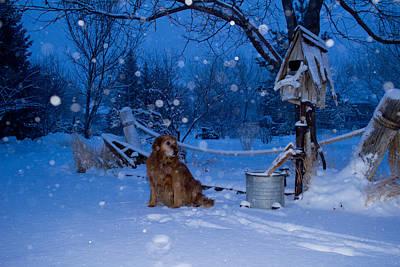 Snowy Golden Retriever Photograph - Golden Snow Globe - Golden Retriever - Casper Wyoming by Diane Mintle