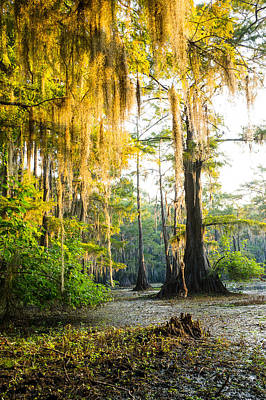 Louisiana Sunrise Photograph - Golden Spanish Moss by Ellie Teramoto