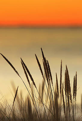 Photograph - Golden Spice Evening by Pete Federico