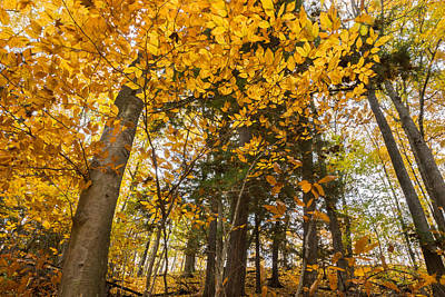 Photograph - Golden Splay by Bill Pevlor