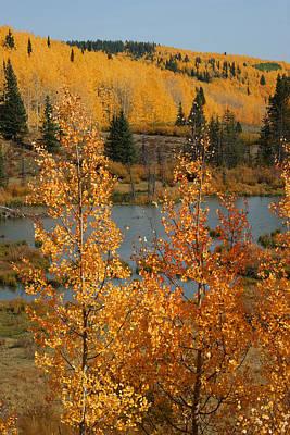 Photograph - Golden Spot by Ernie Echols