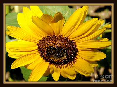 Photograph - Golden Sunflower by Eunice Miller