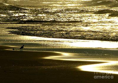 Waterfowl Photograph - Golden Sunrise At Ocracoke by Martha Ingalls