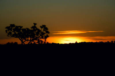 Janet Smith Photograph - Golden Sunrise by Janet Smith