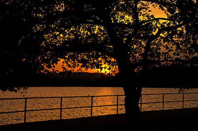 Amazing Photograph - Golden Sunset At Washington's Tidal Basin by Mitchell R Grosky