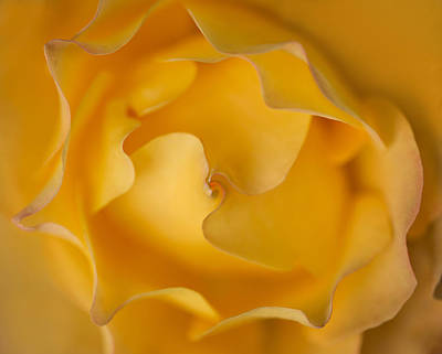 Photograph - Golden Swirl by Mary Jo Allen