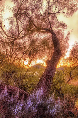Photograph - Golden Tree At The Quartz Mountains - Oklahoma by Jason Politte