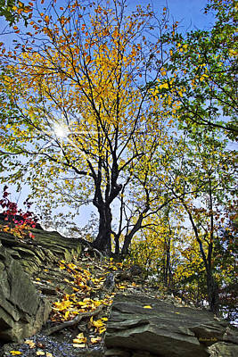 Buttermilk Falls Photograph - Golden Tree by Christina Rollo
