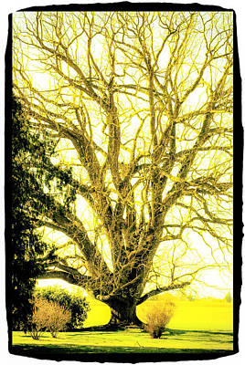 Photograph - Golden Tree by Craig Perry-Ollila