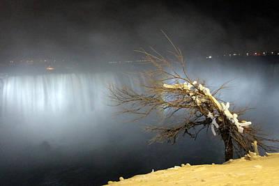 Photograph - Golden Tree by Munir Alawi