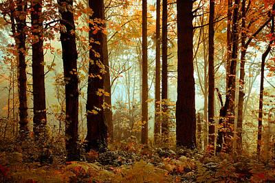 Photograph - Golden Trees by Athena Mckinzie