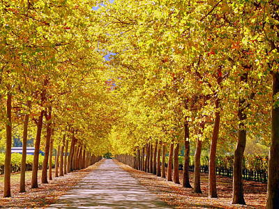 Photograph - Golden Trees Country Lane Vineyard by Jeff Lowe