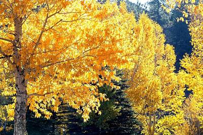 Photograph - Golden Trees by Marilyn Burton