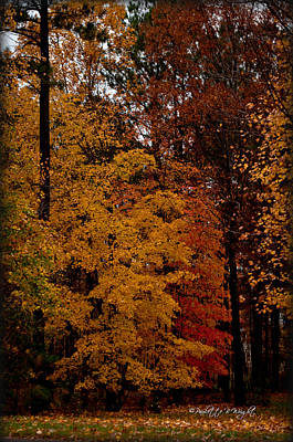 Photograph - Golden Trees by Paulette B Wright