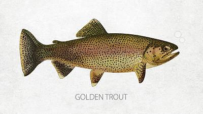 Fish Species Digital Art - Golden Trout by Aged Pixel