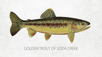 Fish Species Digital Art - Golden Trout Of Soda Creek by Aged Pixel