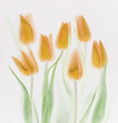 Golden Tulips Art Print