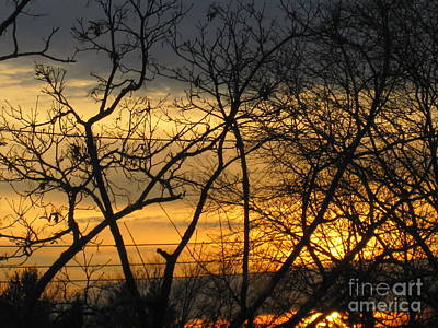 Photograph - Golden Twilight 2 by Tara  Shalton