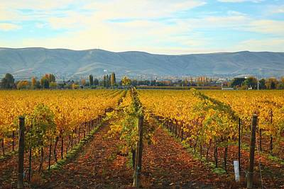 Golden Vineyards Art Print by Lynn Hopwood