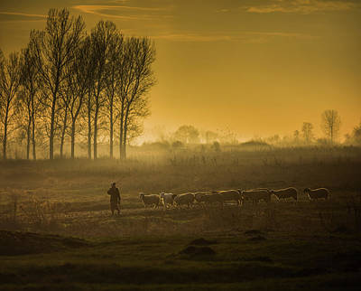 Backlighting Wall Art - Photograph - Golden Walk by Veselin Atanasov