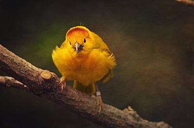 Golden Weaver Bird Art Print